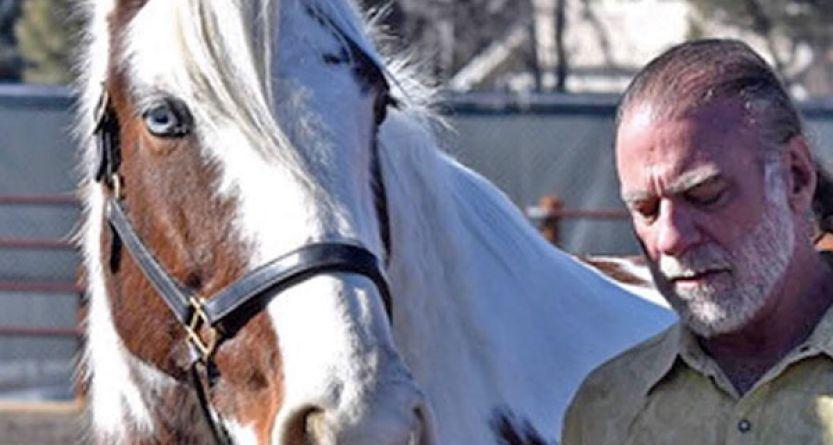 MarkEsq-Media-Photos-Horse